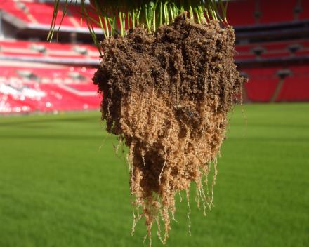 TerraCottem Turf bodemverbeteraar: uitstekende beworteling