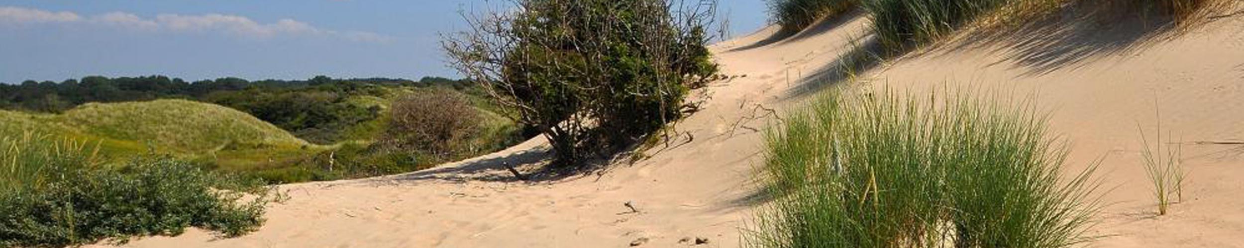 Is zeezand of duinzand geschikt als zand om te mengen met de toplaag van een grasveld of om de drainsleuven op te vullen?